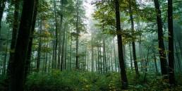 tracksco2 adoptar árboles